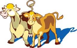 Una mucca ed il suo vitello su un prato Immagini Stock