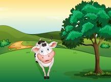 Una mucca sorridente Fotografia Stock
