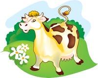 Una mucca su un prato Fotografia Stock