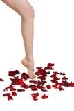 Una muchacha camina en los pétalos de rosas imagen de archivo