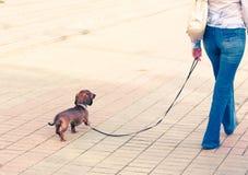 Una muchacha con un perro que recorre en la calle Imagen de archivo libre de regalías