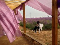 Una muchacha en el viento Imagenes de archivo