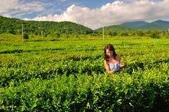 Una muchacha en las montañas recoge té fotografía de archivo libre de regalías