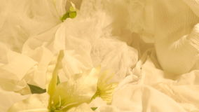 Una muchacha en paraíso Flor hermosa Atmósfera apacible almacen de video