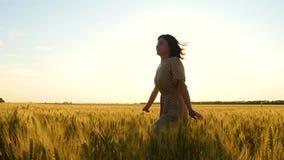 Una muchacha en un vestido de los funcionamientos caucásicos del aspecto en un campo de trigo Agricultura, negocio agrícola metrajes