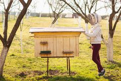 Una muchacha joven del apicultor est? trabajando con las abejas y las colmenas en el colmenar fotografía de archivo libre de regalías