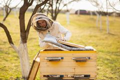 Una muchacha joven del apicultor est? trabajando con las abejas y est? examinando la colmena de la abeja despu?s de invierno foto de archivo