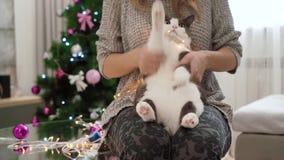 Una muchacha juega con su gato como si él fuera batería Gato de baile increíblemente lindo, mullido con la piel gris y blanca y e metrajes