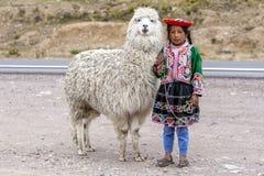 Una muchacha peruana se coloca con una llama en la región de Puno de Perú Fotos de archivo libres de regalías