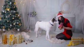 Una muchacha que da un regalo a su perro fornido cerca del árbol de navidad durante la celebración del Año Nuevo almacen de video