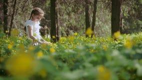 Una muchacha que es 9 años, solamente en el bosque, considera una flor almacen de metraje de vídeo