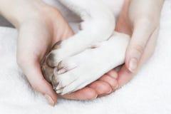 Una muchacha que sostiene las patas de un perro imágenes de archivo libres de regalías