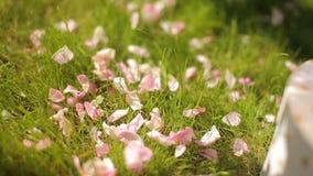 Una muchacha skattering los pétalos color de rosa sobre la hierba verde para la decoración floral festiva almacen de video