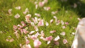 Una muchacha skattering los pétalos color de rosa sobre la hierba verde para la decoración floral festiva metrajes
