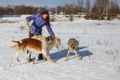 Una muchacha, un lobo y dos galgos caninos jugando en el campo en invierno en la nieve imagen de archivo