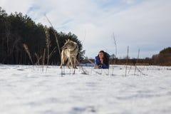 Una muchacha, un lobo y dos galgos caninos jugando en el campo en invierno en la nieve imagenes de archivo
