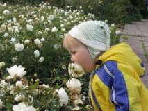 Una muchacha y rosas Imágenes de archivo libres de regalías