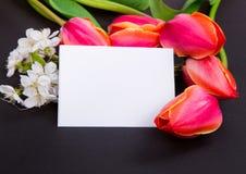 Una muestra en un fondo negro con los tulipanes rojos Fotos de archivo libres de regalías