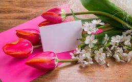Una muestra en un fondo rosado con los tulipanes rojos Imagenes de archivo