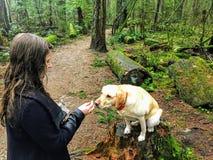 Una mujer alrededor para alimentar a su animal doméstico el laboratorio amarillo una invitación del perro mientras que camina en  foto de archivo libre de regalías
