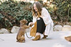 Una mujer blanca joven sacude las manos con su perro casero de Boston Terrier sonríe feliz fotos de archivo