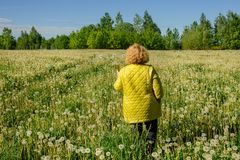 Una mujer camina en el bosque en el campo de dientes de león fotografía de archivo libre de regalías