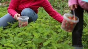 Una mujer con las fresas de la cosecha de la muchacha almacen de metraje de vídeo