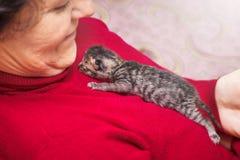 Una mujer de los ancianos se sostiene en pecho del gatito recién nacido Demostraciones de la mujer fotografía de archivo