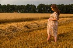 Una mujer embarazada joven entre el campo de trigo Imagen de archivo libre de regalías