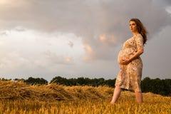 Una mujer embarazada joven entre el campo de trigo Imagenes de archivo
