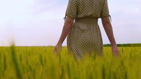 Una mujer en un vestido está en el campo, manos que tocan los oídos del trigo Manos de un primer de la mujer Agricultura almacen de metraje de vídeo