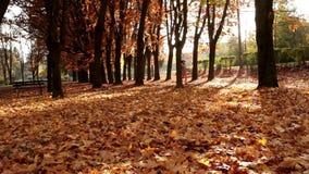 Una mujer está activando en el parque en otoño almacen de metraje de vídeo