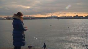 Una mujer está alimentando gaviotas Tiempo de la tarde almacen de metraje de vídeo