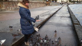 Una mujer está alimentando pájaros en el muelle metrajes