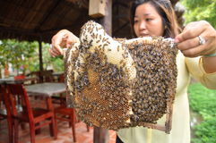 Una mujer está mostrando a sus apicultores la bandeja de su granja en la ciudad de Ben Tre Foto de archivo libre de regalías