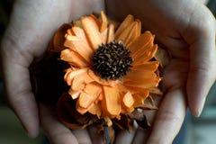 Una mujer está sosteniendo las flores secadas en su palma Foto de archivo