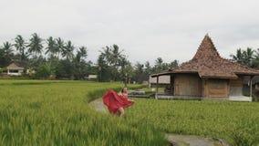Una mujer europea joven hermosa feliz camina a través de las selvas tropicales y las terrazas del arroz, llevan un brillante de s almacen de video