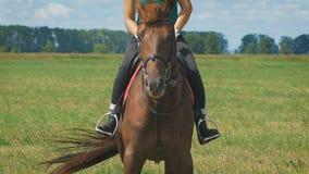 Una mujer hermosa joven que monta un caballo en un campo almacen de video