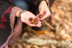 Una mujer joven coge las castañas caidas en la tierra en un bosque otoñal fotografía de archivo libre de regalías