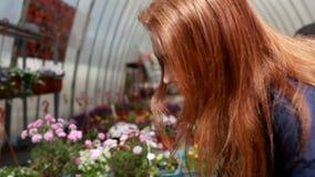Una mujer joven elige las flores para el jardín almacen de video