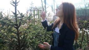 Una mujer joven elige un árbol de navidad por la Navidad y el Año Nuevo metrajes