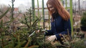 Una mujer joven elige un árbol de navidad por la Navidad y el Año Nuevo almacen de video