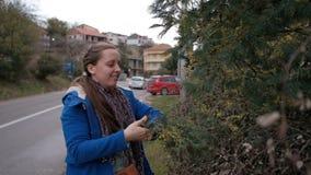 Una mujer joven en el camino interrumpe ramas de la mimosa en la primavera metrajes