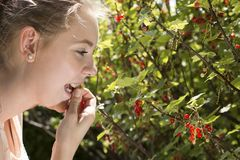 Una mujer joven está comiendo bayas frescas Imagen de archivo