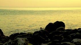Una mujer joven nada en el mar en la puesta del sol almacen de video
