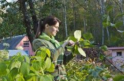 Una mujer joven que cuida para las flores. foto de archivo