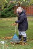 Una mujer limpia las hojas Fotografía de archivo