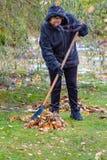 Una mujer limpia las hojas Imagen de archivo