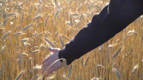 Una mujer lleva a cabo una mano en un campo de trigo almacen de video