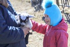 una mujer mayor en sus brazos es una pequeña cabra tenga tono imagenes de archivo